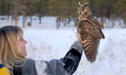 Owl_Release
